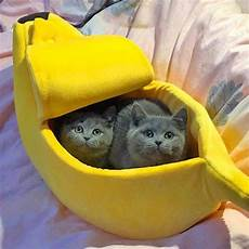 banana shaped bed is the hideaway for pets to
