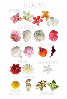 Flower Chart With Names And Pictures September Flower Chart Flower Chart Flower Guide