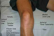 Right Knee Anatomy Muscles Test 3 Human Anatomy And Physiology With Alvarez