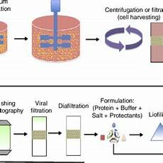 Bioprocess Flow Chart The Biopharmaceutical Manufacturing Technology Flowchart
