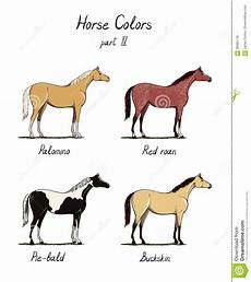 Chestnut Horse Color Chart Set Of Horse Color Chart On White Equine Coat Colors With