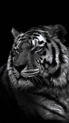black and white tiger iphone wallpaper iphone 5 wallpaper tiger wallpapers