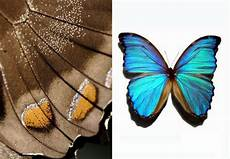 Design By Nature Tanov Finding Inspiration In Nature Biomimicry For A Better Planet