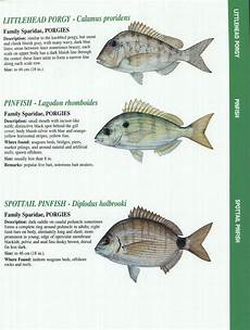 Florida Fish Id Chart Crystal River Fishing Report Florida Gulf Fish