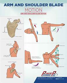 Arm Diagnosis Chart Scaption Motion In The Scapular Plane Roughly 30