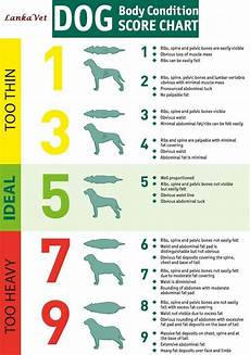 Rottweiler Growth Chart Image Result For Rottweiler Growth Chart Pictures Dog