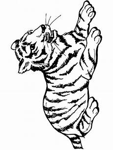 tigers coloring pages and print tigers coloring