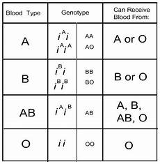 Genotype Chart For Blood Types Blood Typing
