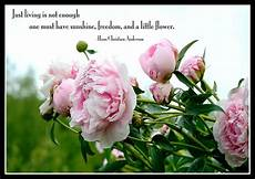 flower wallpaper with morning morning quotes with roses quotesgram