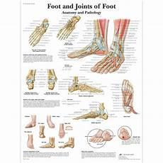 Foot Anatomy Chart Anatomical Charts And Posters Anatomy Charts Foot And