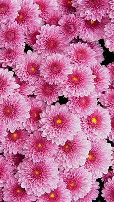 iphone wallpaper pictures flowers awesome pink flowers wallpaper iphone iphonewallpapers