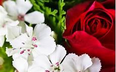 flower wallpaper in hd colorful flowers wallpapers hd pixelstalk net