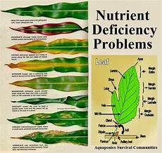 Nutrient Deficiency Chart Cannabis Garden And Farms What Does The Leaf Says About Nutrient