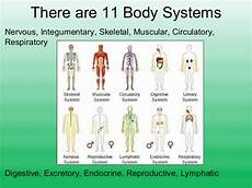 11 Body Systems The Human Body