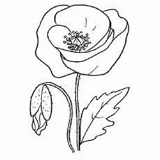 fiori da disegnare 29 disegni fiori da colorare