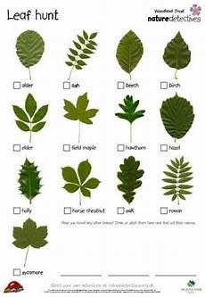 Oak Leaf Id Chart Leaf Identification Nature Kids Pinterest