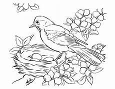 Vogel Malvorlagen Pin Xolchen Auf Pauline Vogel Malvorlagen