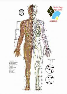 Spinal Pressure Points Chart Download Pressure Point Chart For Free Formtemplate