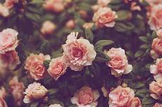 Flower Wallpaper Vintage Hd hd vintage flower backgrounds pixelstalk net