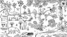 malvorlagen urwald zum ausdrucken regenwald zum ausmalen wwf junior