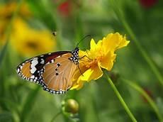 wallpaper flower and butterfly flowers for flower hd flowers n butterfly desktop