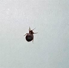 bedbug service canton termite pest