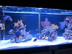 Saltwater Fish Tank Lights Types Of Saltwater Aquariums The Aquarium Setup