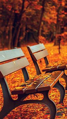 Iphone 8 Wallpaper Fall by Nature Autumn Fall Leaves On Roadside Bench Iphone 8