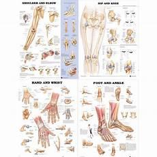 Laminated Joint Chart Bundle Shoulder Amp Elbow Hip