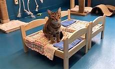 viral shows shelter cats enjoying doll beds donated
