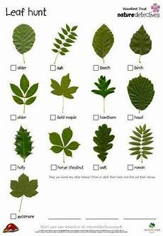 Tree Leaves Chart Leaf Chart Tree Leaf Identification Forest School