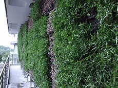 Vertical Green Ngee Polytechnic S Vertical Extensive Green Wall