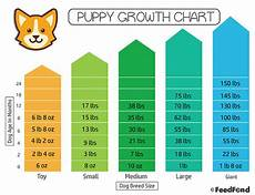 Spaniel Growth Chart Puppy Growth Chart The Simplest Way To Figure Out Your