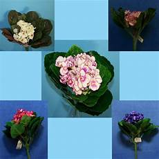 African Violet Lighting Artificial Quality 9 Quot Choose African Violet Gloxinia Artificial Faux