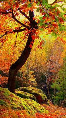 Fall Wallpaper Iphone Aesthetic by Aesthetic Autumn Wallpapers Wallpaper Cave