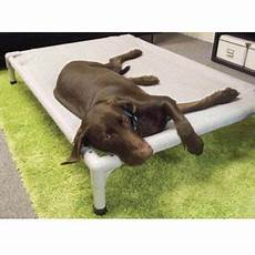coolaroo 174 aluminum frame elevated pet bed bed bath beyond