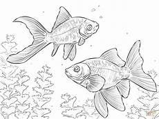Malvorlagen Kostenlos Ausdrucken Handy Ausmalbild Komet Goldfisch Ausmalbilder Kostenlos Zum
