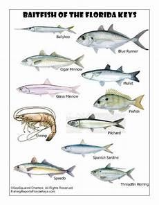 Florida Fish Id Chart Florida Keys Fish Identification 171 Marathon Florida Keys