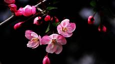 Flower Wallpaper For Laptop by Laptop Flower Wallpapers Free Pictures On Greepx
