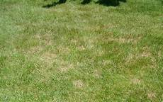 Brown Patch Grass What Re Those Brown Patches In My Yard Securelawn