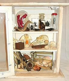 create a cabinet of curiosities