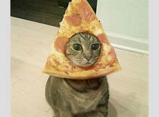 Pizza Cat Face Memes Are On The Rage