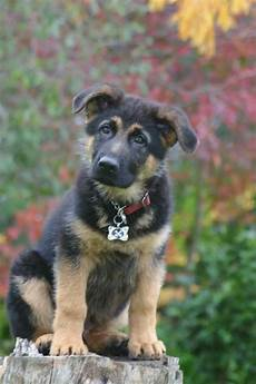 German Shepherd Ear Chart 15 Signs You Re In Love Realty Executives Mi Invoice