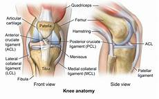 Knees Ligaments And Tendons Ligament Injuries To The Knee Comprehensive Orthopaedics