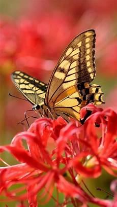iphone lock screen butterfly wallpaper butterfly iphone 6 wallpaper 2020 live wallpaper hd