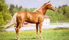 Healthy Horse Weight Chart Feeding Senior Horses For Healthy Horse Weight Gain
