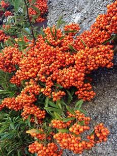 plantas penduradas ao ar livre pin de aline padilha de souza em flores