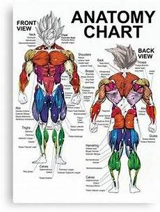 Full Body Anatomy Chart Image Result For Muscle Diagram Of Body F17 Mens