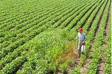 Crop Pricing Weeds Present A Greater Challenge To Feed Crop Production