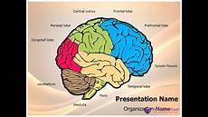 Brain Ppt Templates Neurology Human Brain Powerpoint Presentation Template